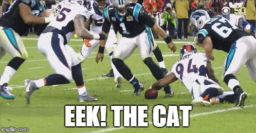 Cam Newton Starring in Eek! The Cat
